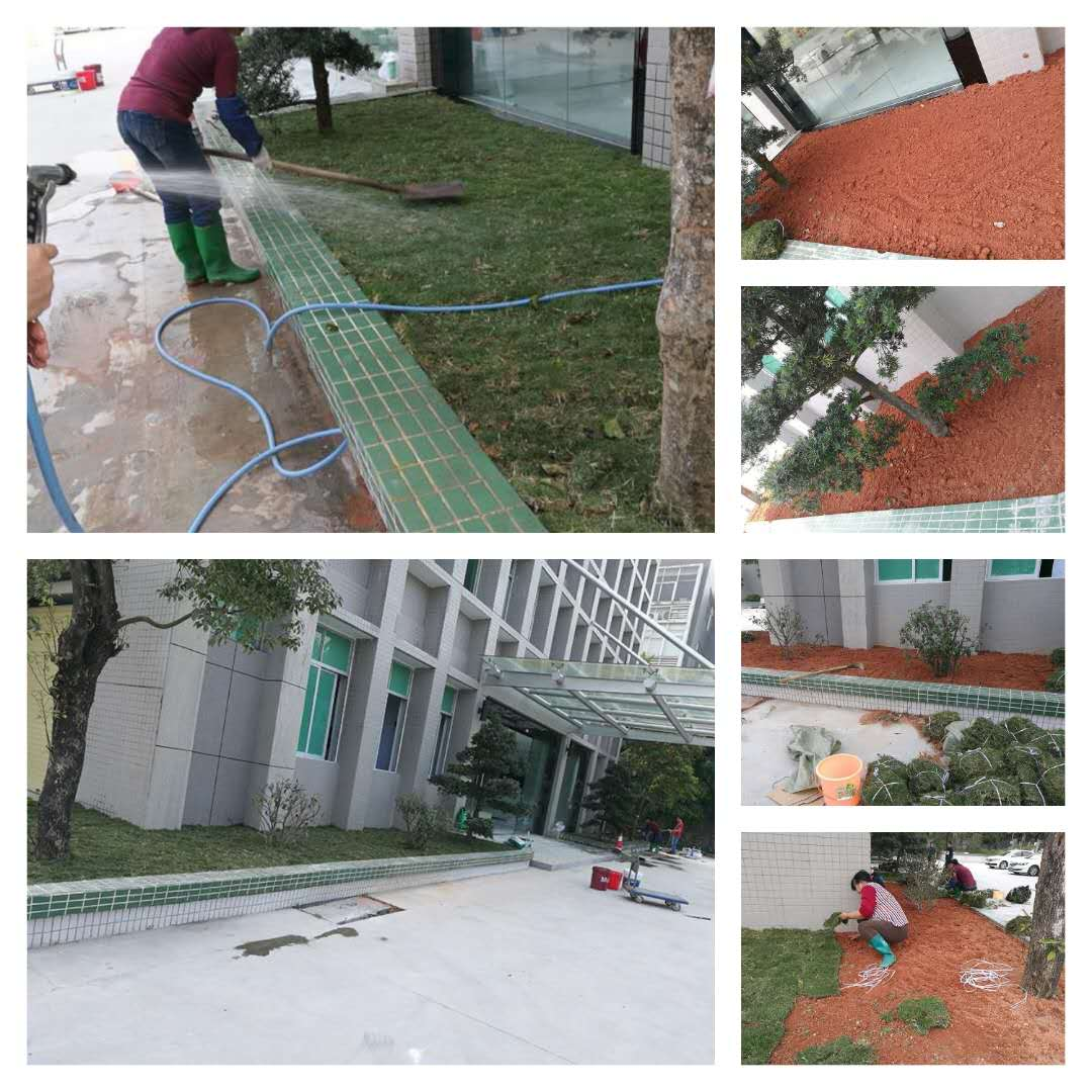 办公楼绿化改造